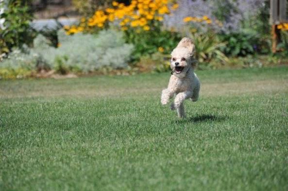 frolicking SSB watchdog