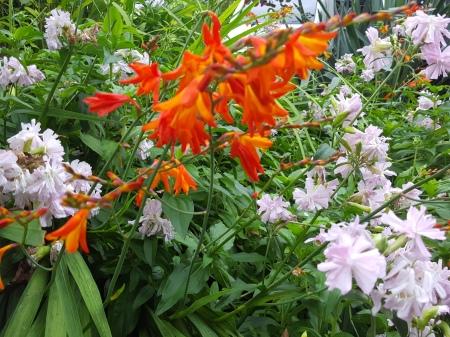 Sellwood flowers