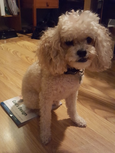 Owen sitting on book.jpg